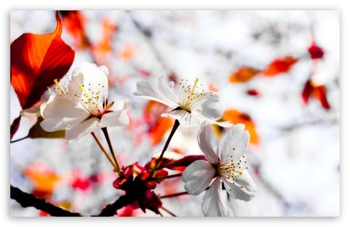 Spring Season Flowers HD desktop wallpaper High