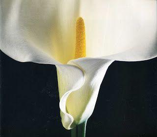 Take me with U: Robert Mapplethorpe - Flowers