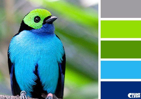 Chameleon color palette for Farbmuster wandgestaltung
