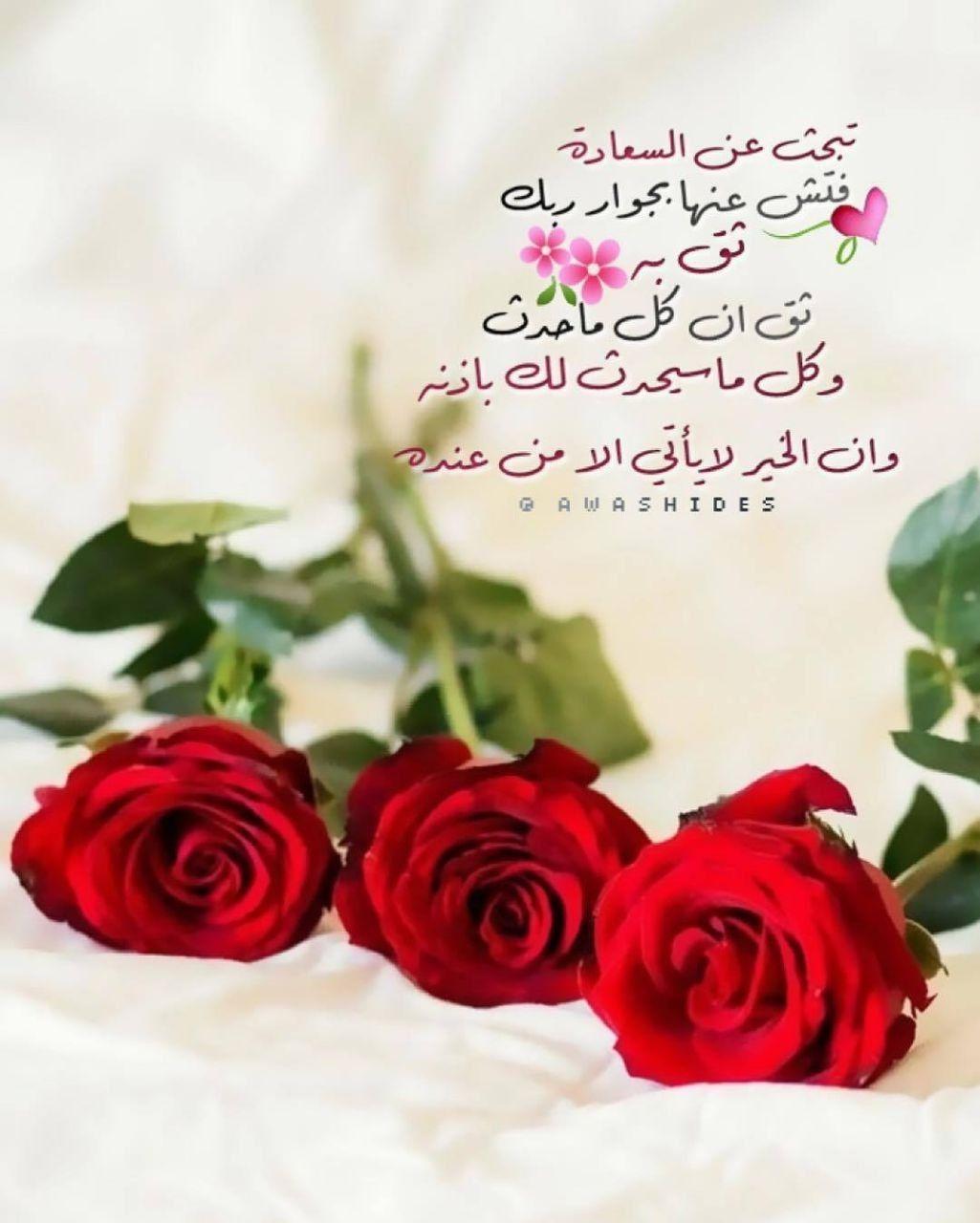 السعاده Flowers Plants Rose