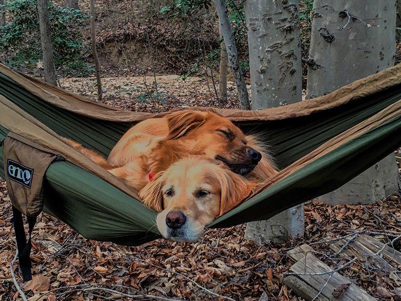 hammock dogs Hammock Camping Experiences and Blog Dog
