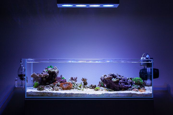 Ada 60f shallow reef pinterest shallow and aquariums for Ada fish tank