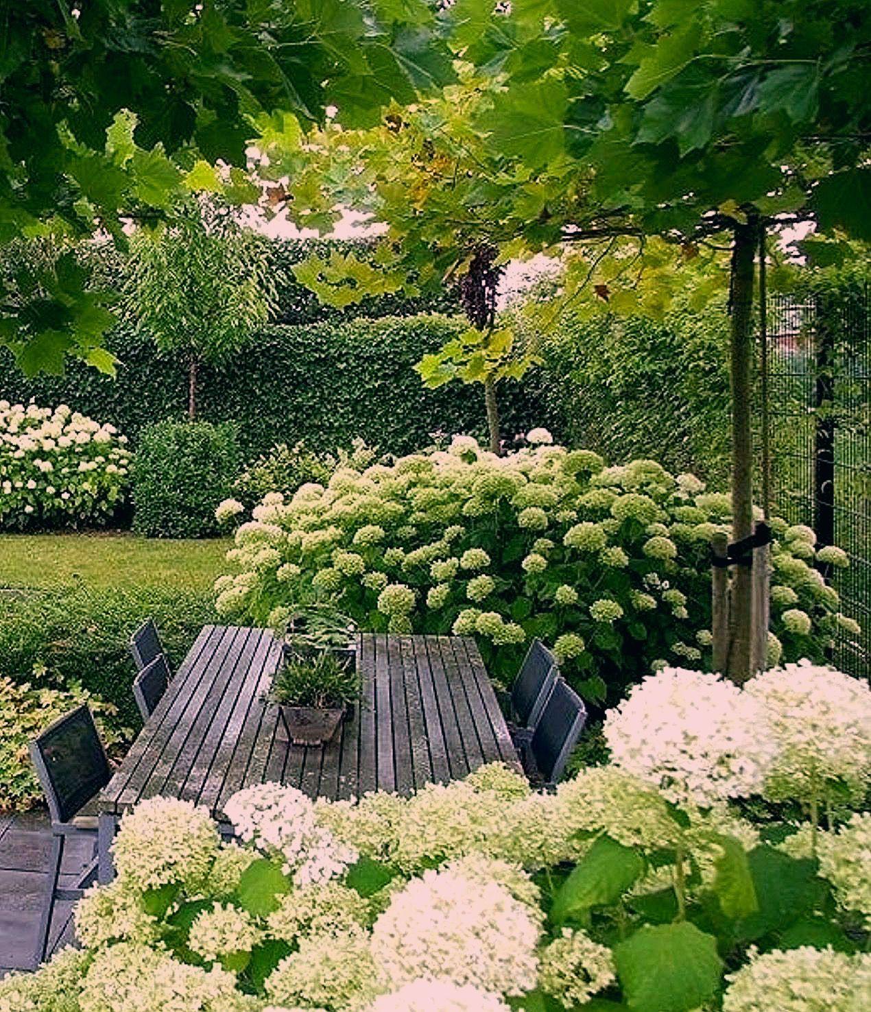 Photo of Pflanzplanung – Hortensien für eine lange Blüte im Garten – My Blog