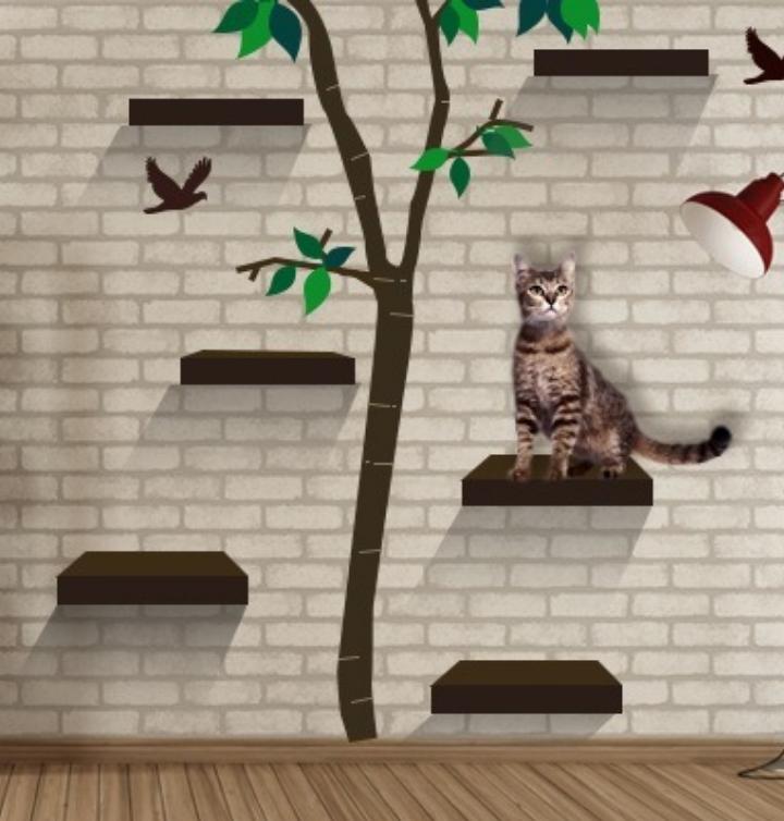 Fun Cat Perches And Trees For Book Fair Paws Books
