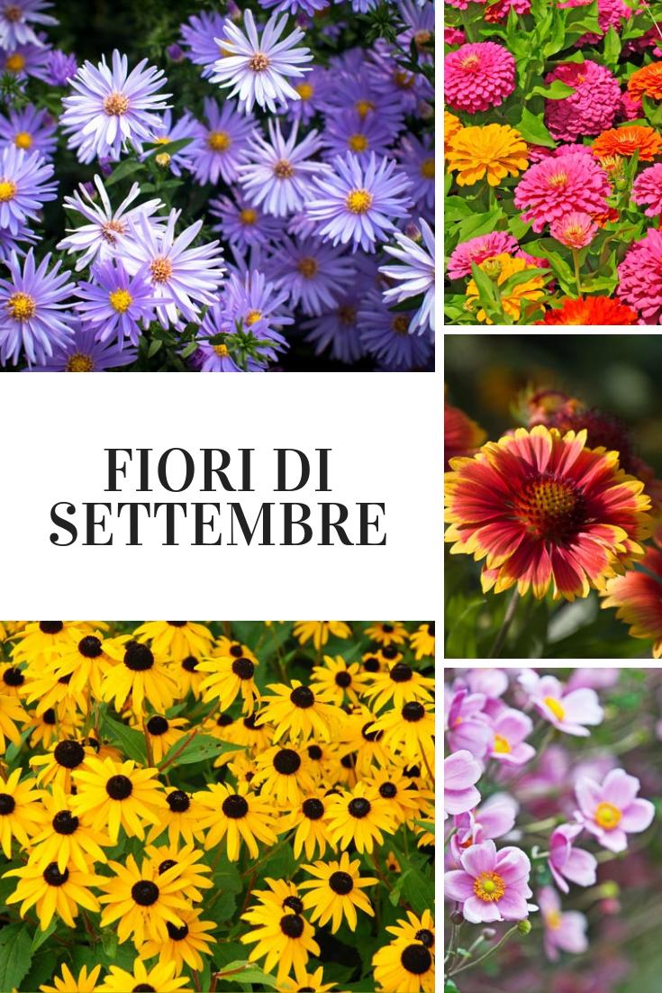 Fiori Da Balcone Perenni fiori di settembre nel 2020 (con immagini)   fiori, giardino