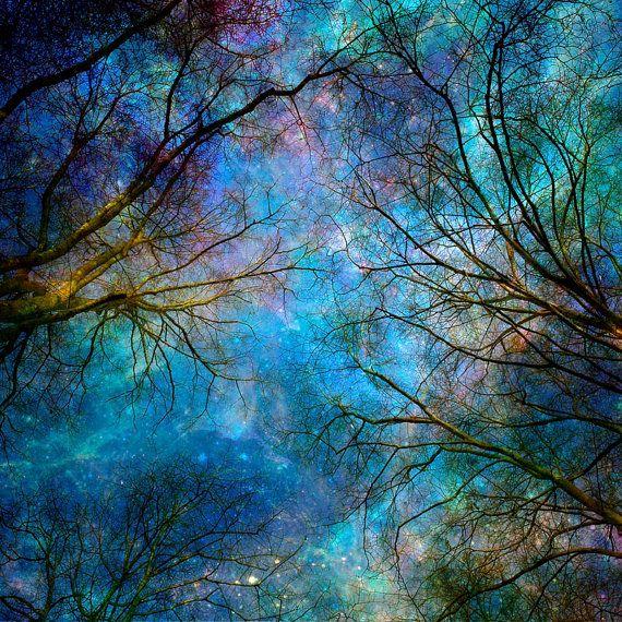Nature Photography Winter Trees Stars Night Sky BlueSapphire Nature Wall Art  Home Decor.
