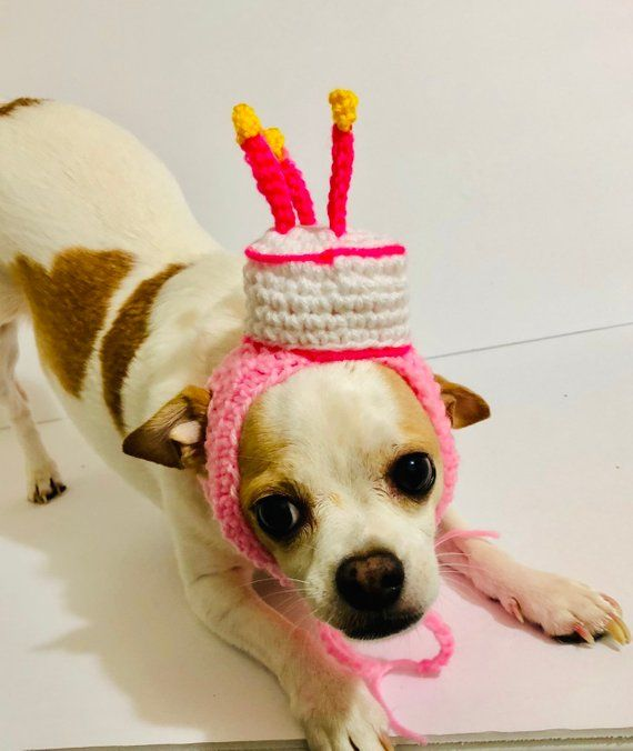 Dog Birthday Party Hat Crochet Petite Clothes Designer Winter Pet Accessories