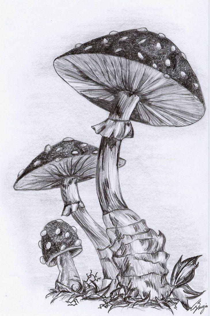 Mushrooms by nerissa the vampire on deviantART   Mushroom drawing ...