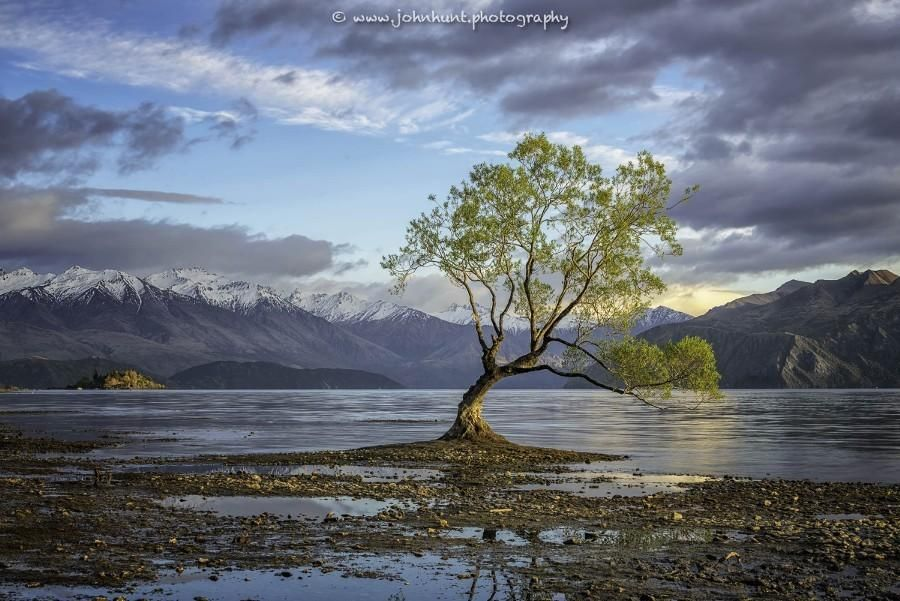 Sunlight on the lonely tree by JohnHunt1