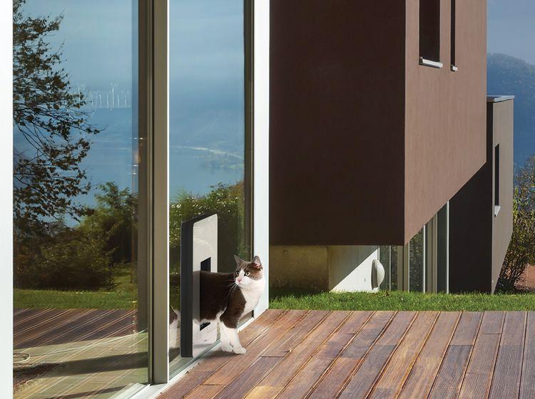 haustiere in der mietwohnung tipps vom experten wohnen. Black Bedroom Furniture Sets. Home Design Ideas