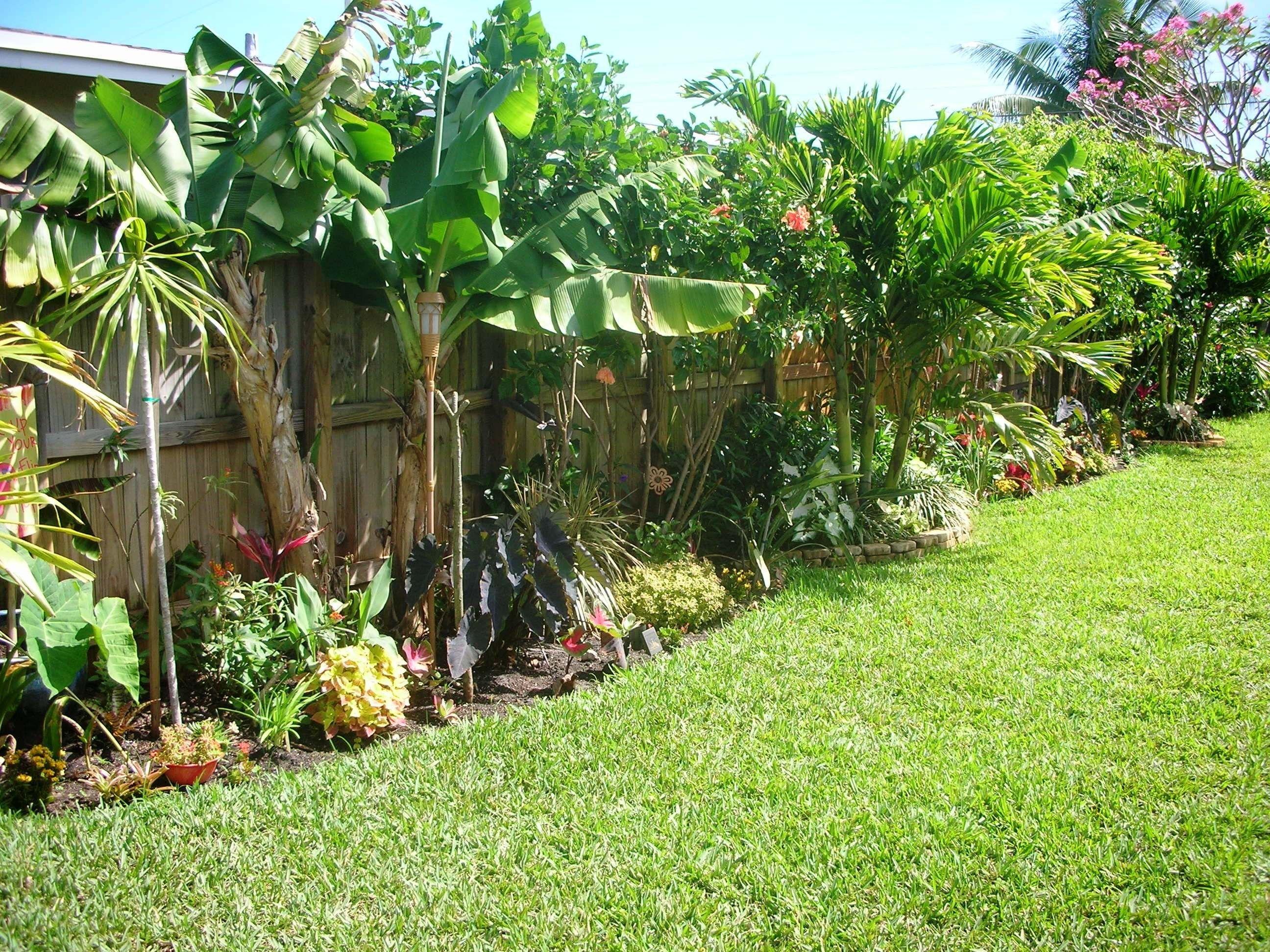 diy tropical fence border garden