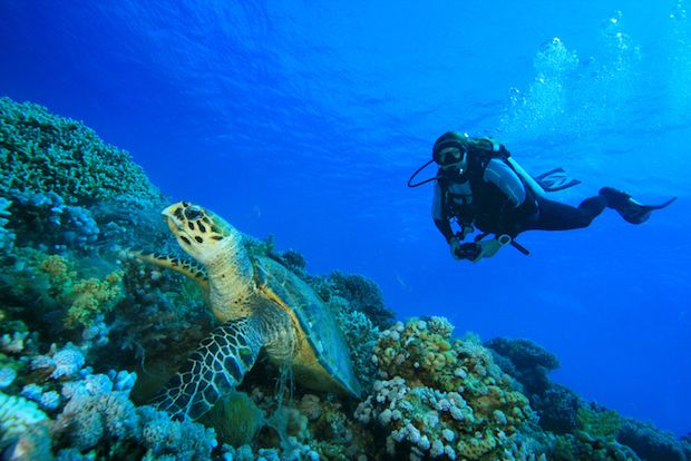 Marine Conservation Research And Biology Internships Abroad Marine Conservation Volunteering With Animals Internships Abroad