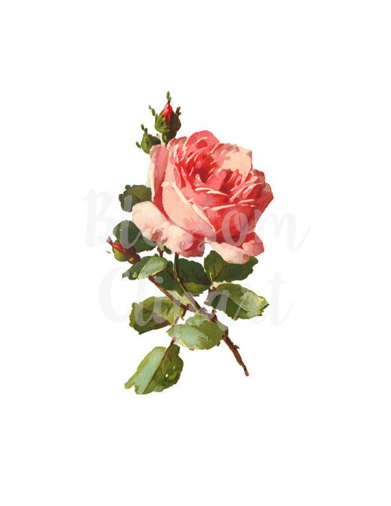 Vintage Rose Antique Watercolor Rose Illustration Clip Art Etsy Rose Illustration Watercolor Rose Vintage Roses