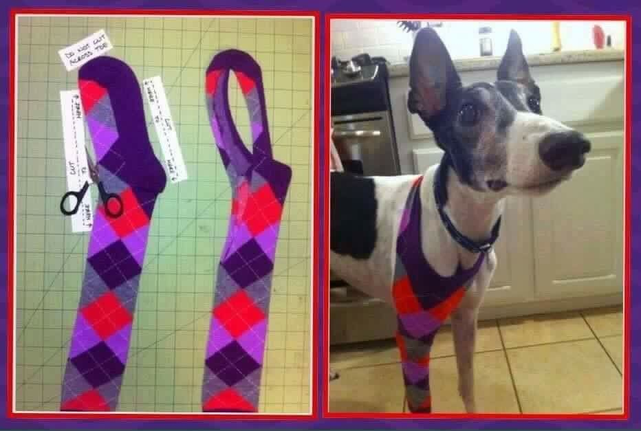 Clever Diy To Prevent Licking And Scratching To Front Leg Injuries