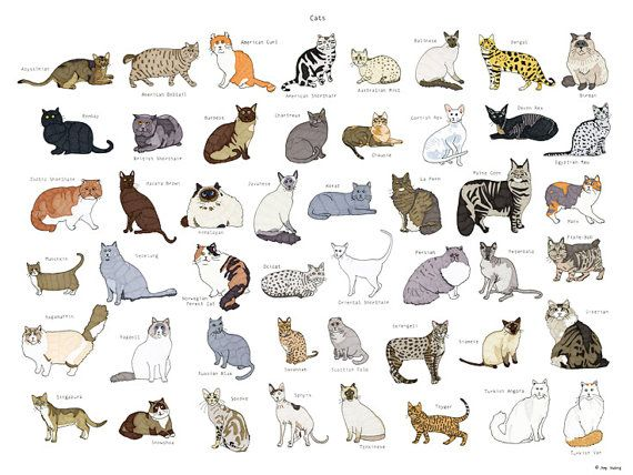 Cat Breeds Poster  18x24 by AmyHwangShop on Etsy