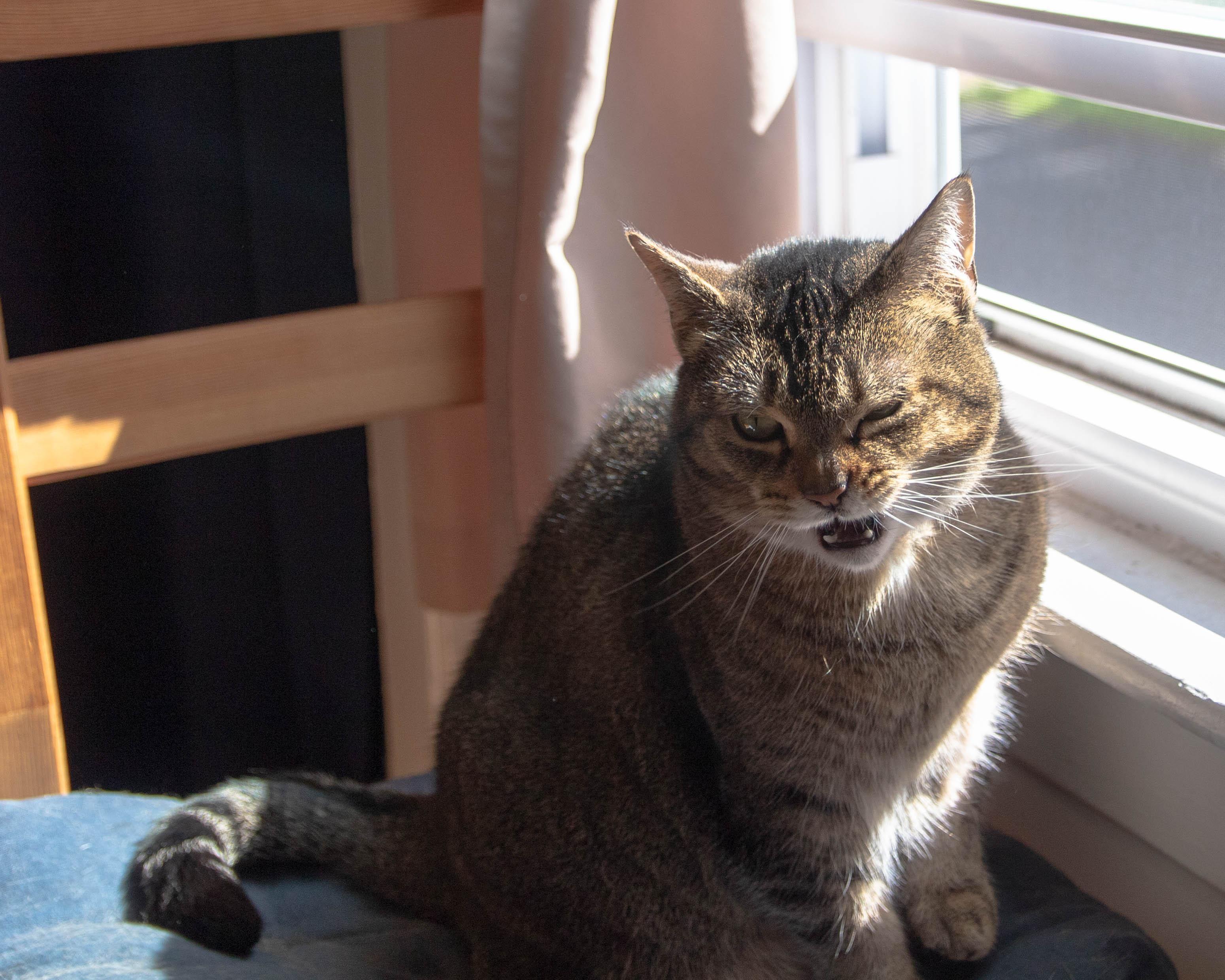 Psbattle Sneezing Cat Diy Car Picture Car Wallpaper Cats Photoshop Battle Cat Diy