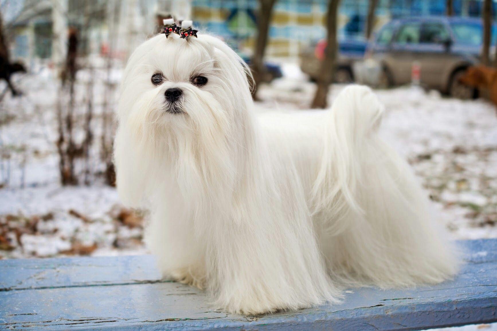 Pin de sweetheart en DOGS | Pinterest