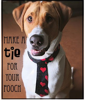 a tie for your pooch