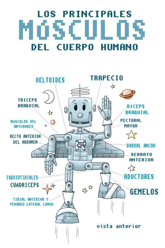 los principales músculos para niños imprimibles   mapa semantico ...