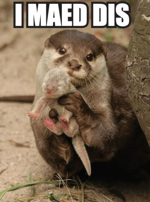 Aww, what a sweet baby otter.