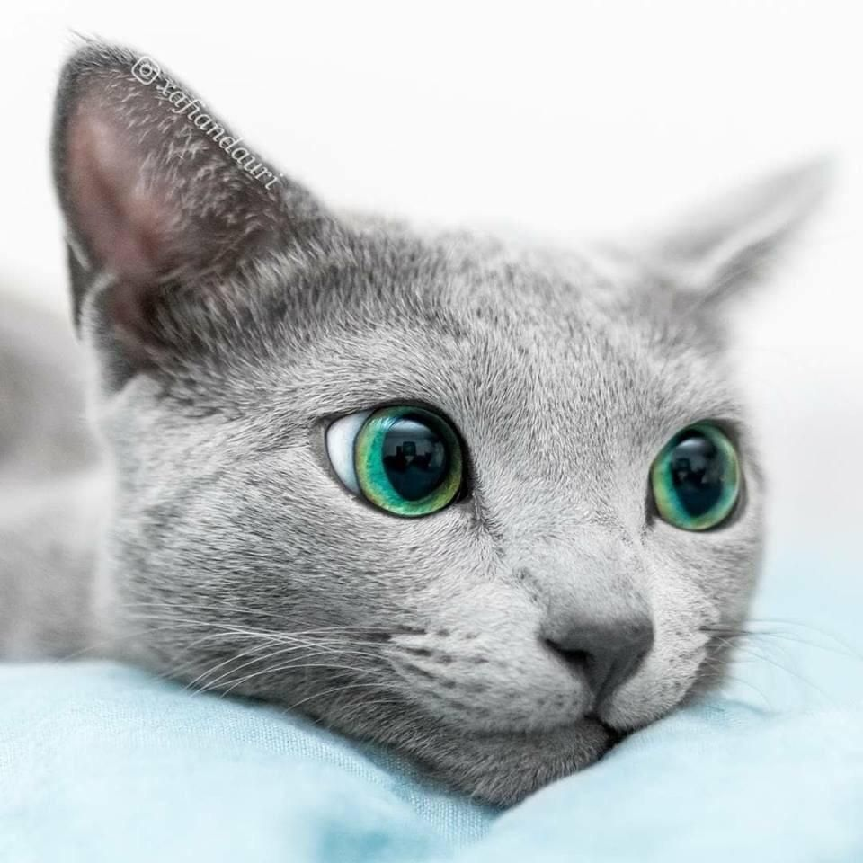 Awesome Green Eyes Cute Animals Cats Pretty Cats