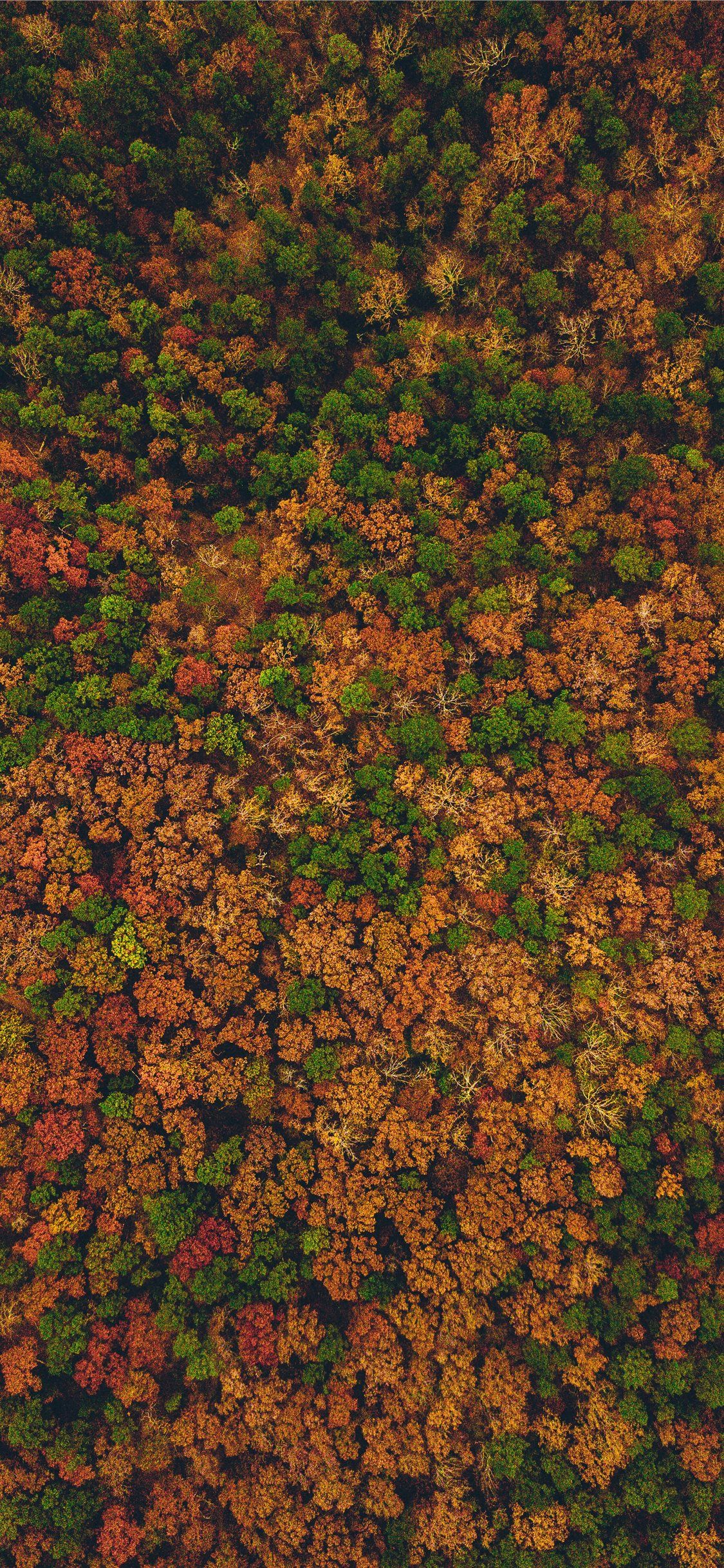 aerial view photography of forest iPhone X Wallpapers