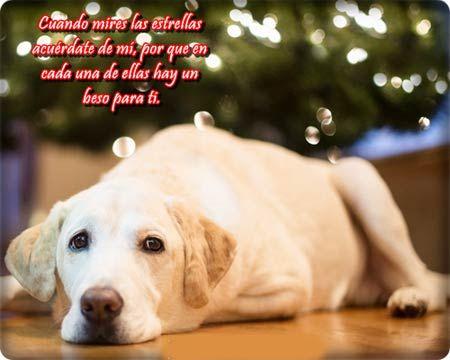 Frases De Amor Con Perros Perros Perro Gato Poemas