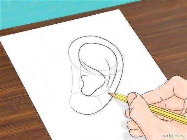 Paso 5 Para Aprender A Dibujar Orejas De Hombre Y De Mujer