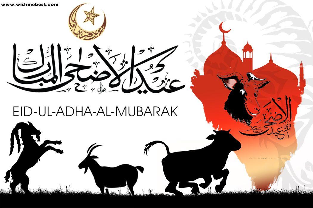 Eid Ul Adha Mubarak Bakra Eid Mubarak Greetings Eid Mubarak Wishes The Best Collection For You Eid Ul Adha Eid Eid Mubarak Wishes