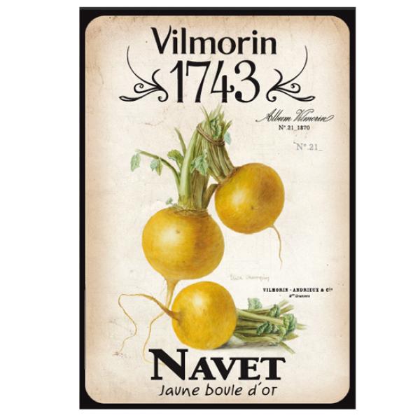 Vilmorin 1743 navet graines de fleurs et legumes for Vilmorin graines