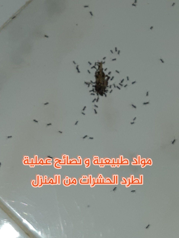 مواد طبيعية و نصائح عملية لطرد الحشرات المزعجة من المنزل Blog Home Decor Decals Blog Posts