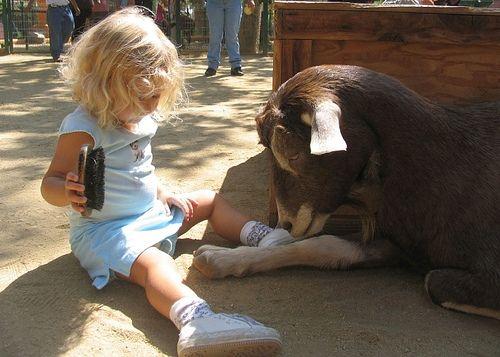 Los Angeles Zoo Los Angeles Ca Kid Friendly Activity Reviews Los Angeles Zoo Los Angeles With Kids California Kids