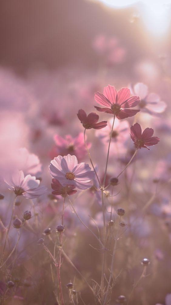 Pin On Pink Flowers Fantastic flower wallpaper for