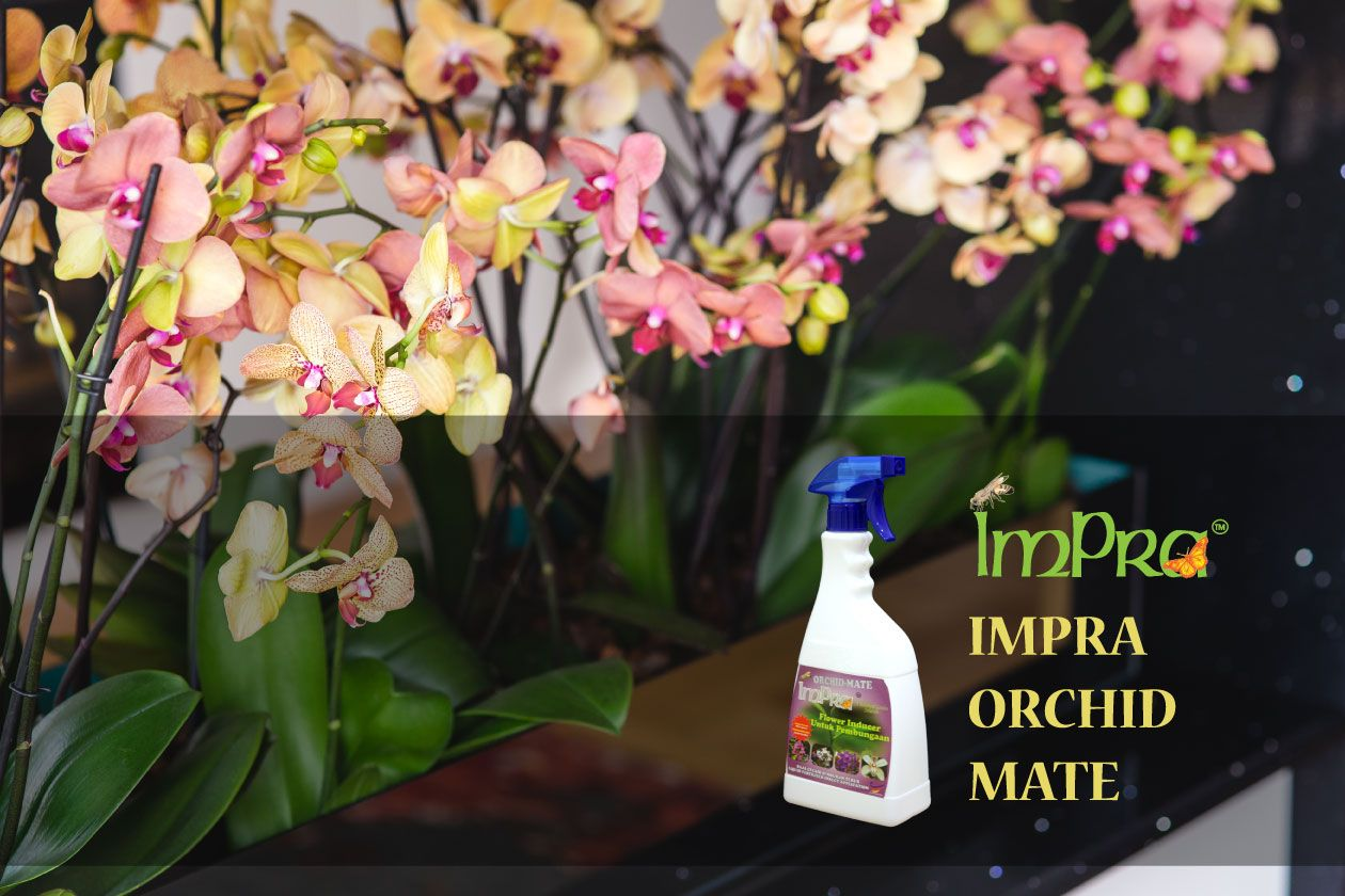 Unduh 88+ Gambar Bunga Orkid Cantik Paling Keren