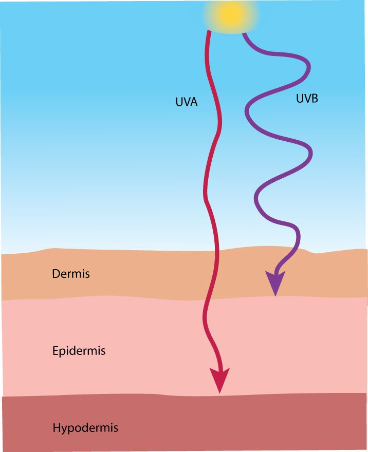 Do you know the difference between UVA & UVB rays? Do you ...