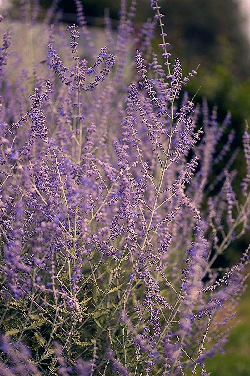 Pflanzen für trockene Beete in der Sonne