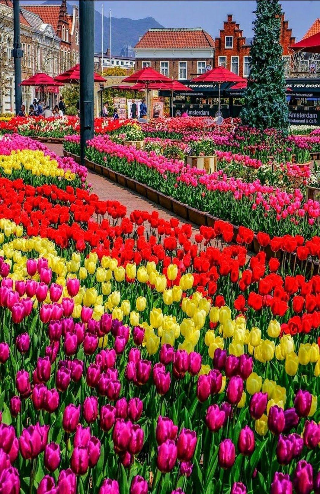 Sign In Beautiful Flowers Garden Tulips Garden Beautiful Flowers