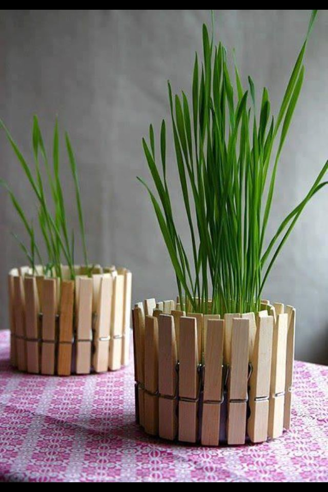 Plant pot made from clothes pegs