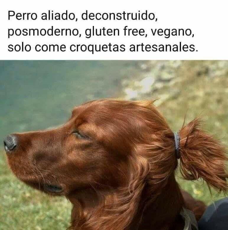 Perro Vegano Memes Divertidos Memes Graciosos Memes