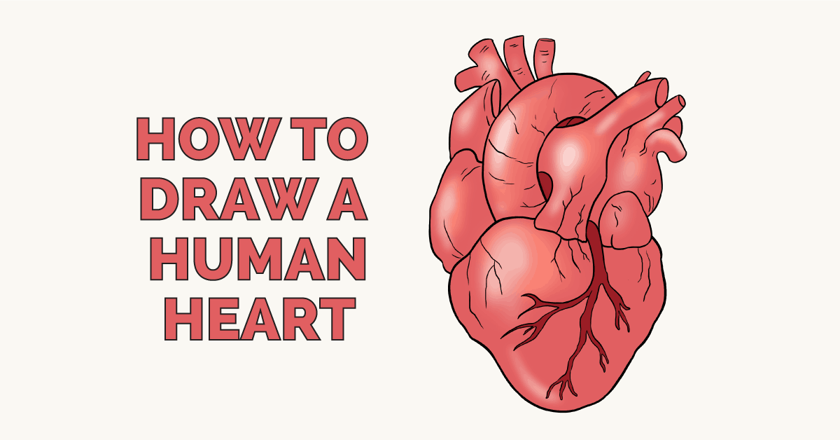 How to Draw a Human Heart | Drawing tutorial easy, Human ...