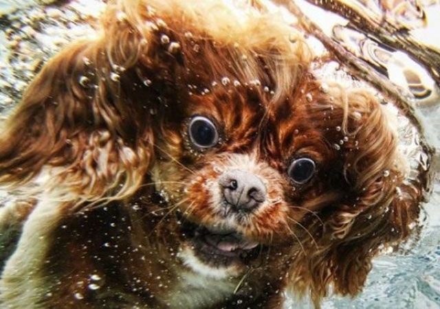 Dogs funny faces underwater 1 laughed so hard i cried pinterest dogs funny faces underwater 1 voltagebd Images