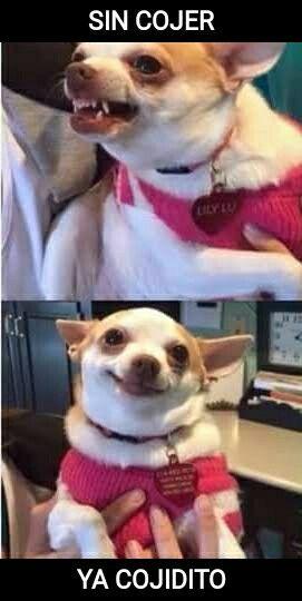 Jejeje Memes De Animales Tiernos Fotografias Divertidas De Animales Mascotas Memes