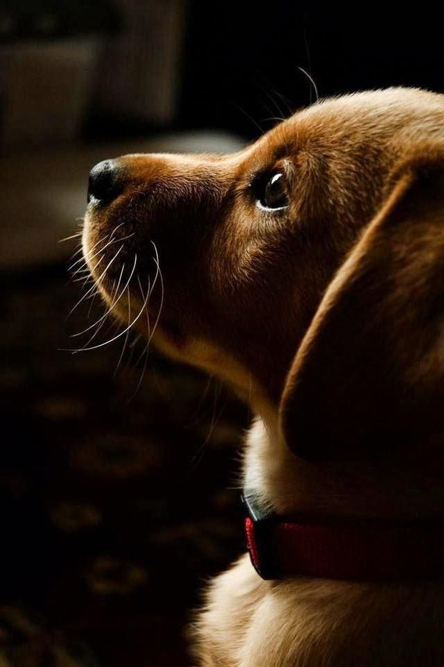 50 Lovely Puppy Pictures | Art and Design