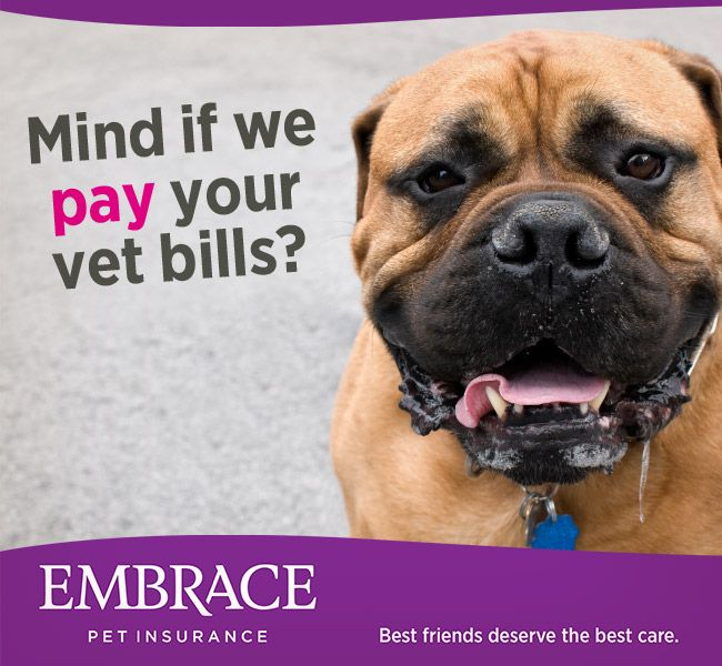 Don T Let Expensive Vet Bills Come Between You And The Best Care For Your Pet Get A Quote From Embrace Pet