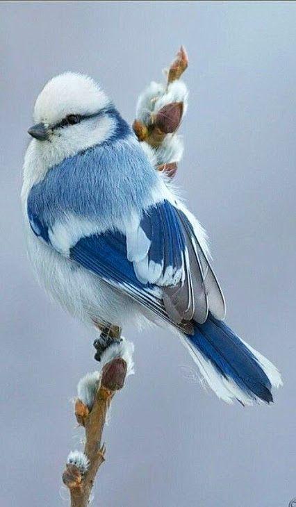 Photo of 55 einzigartige Bilder von Vögeln, die Sie lieben werden #adorerai #imagine #uccelli #uniche…