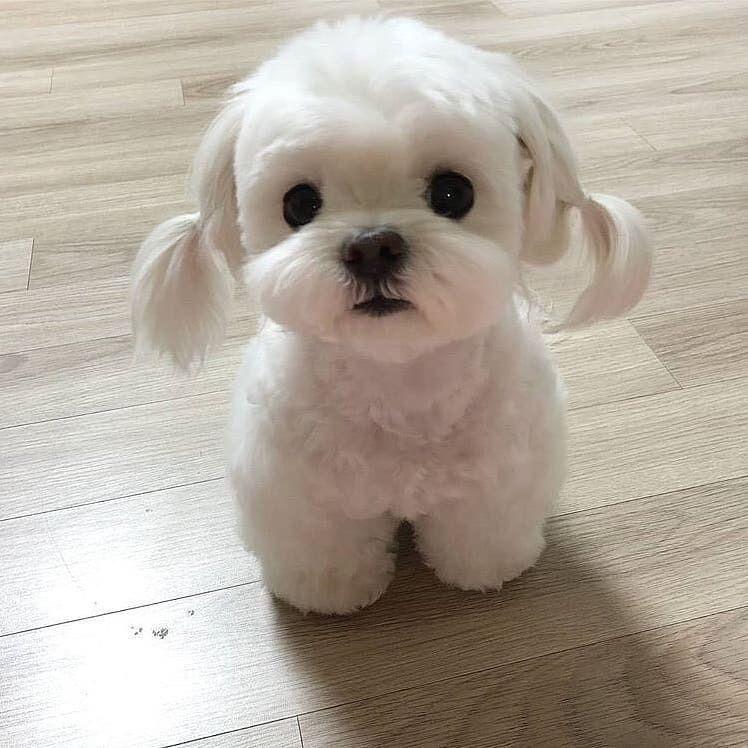 Omg Look This Little Cute Venidress Puppy Inspo Cute Cute