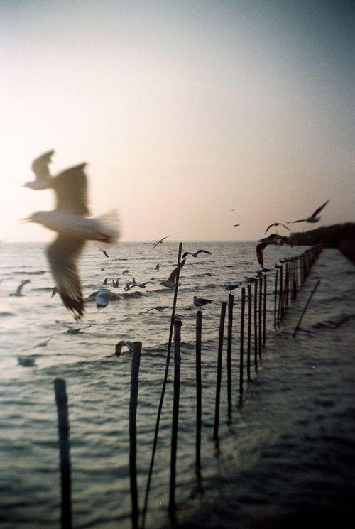 81a79c112 seagulls   S U M M A . T I M E   Sea, Seaside, Ocean