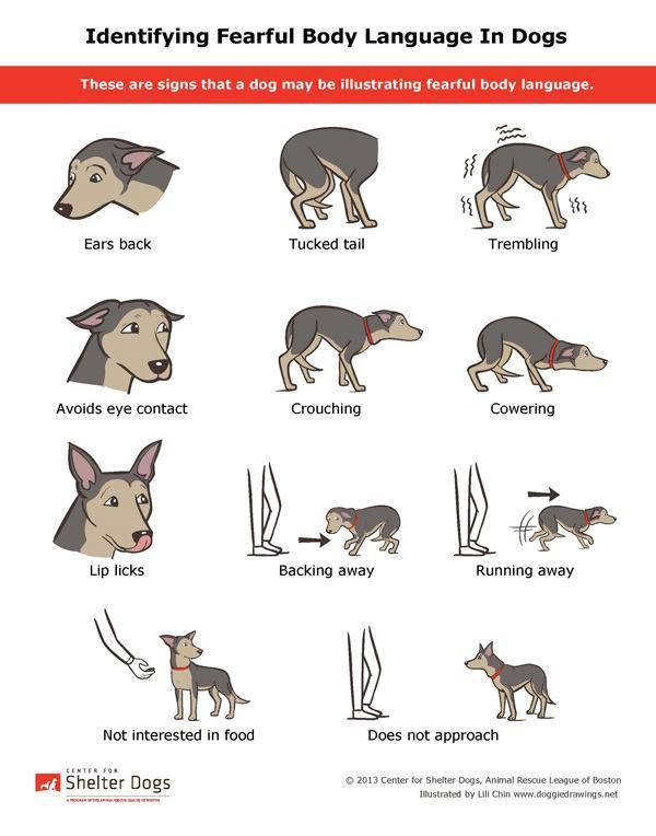 Pin By Alexis On Adorable Animals Dog Body Language Dog