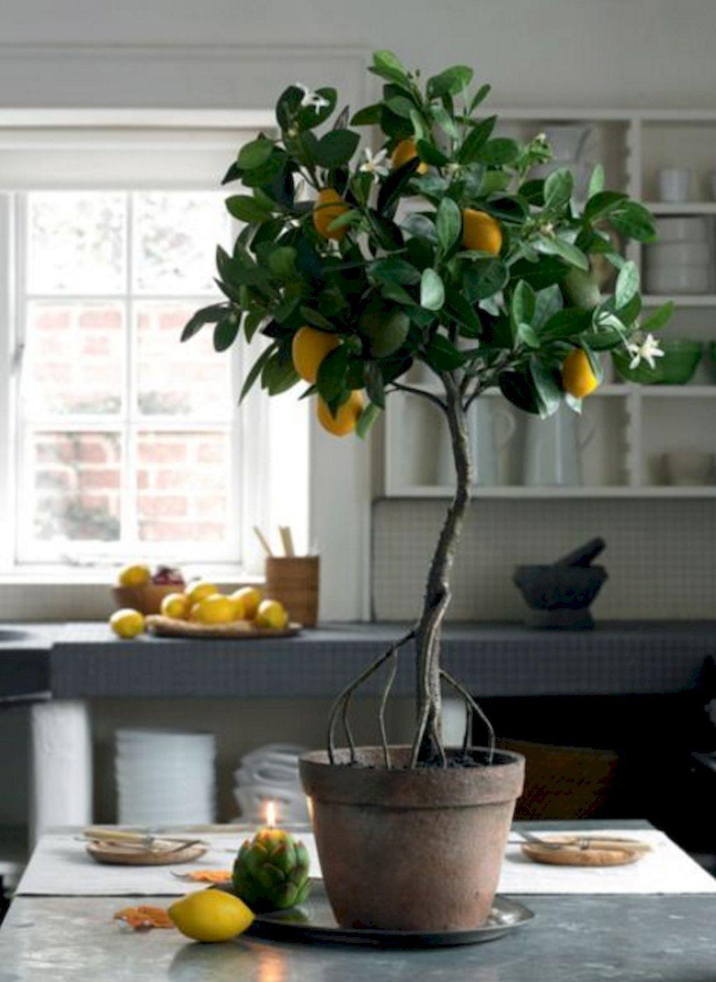 Immagini Di Piante E Alberi 37 adorable indoor plants ideas for summer | piante da