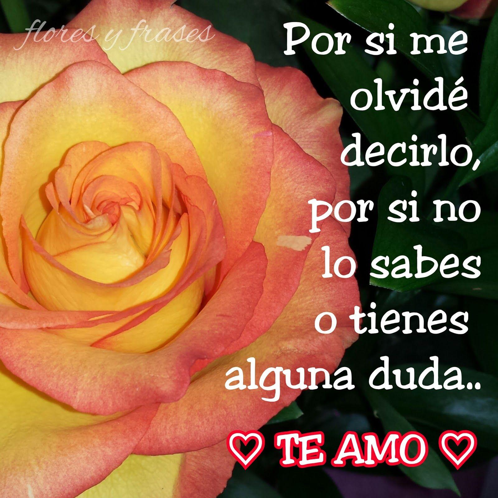 Flores Y Frases Frases Y Postales Dedicadas Al Amor Flores Y